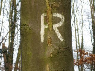 Baum R