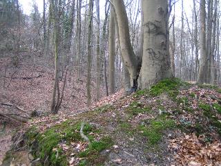 Baum Ableger