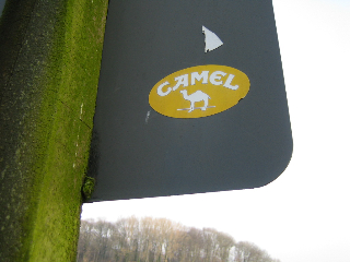 Camel Schild